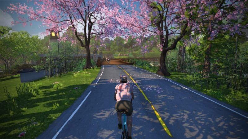 マクリ島の桜を紹介する画像